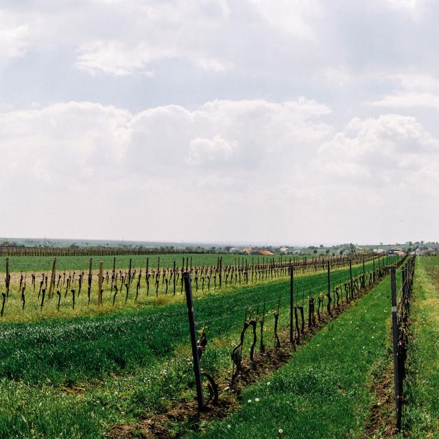 """""""Panorama Burgenland"""" stock image"""
