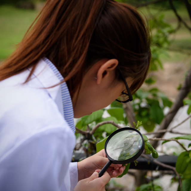 """scientist woman inspect leaf by magnifying glass"" stock image"