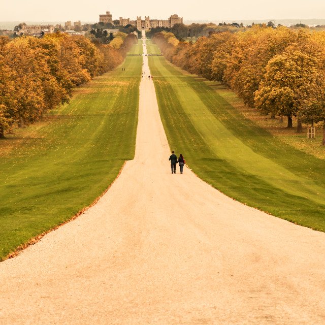 """Windsor Great Park - The Long Walk"" stock image"