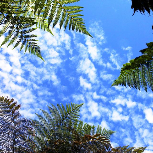 """Green Ferns Blue Sky"" stock image"