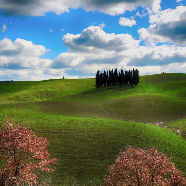 """Cypresses HDR"" stock image"