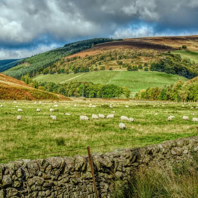 """""""Scottish Rural Landscape"""" stock image"""
