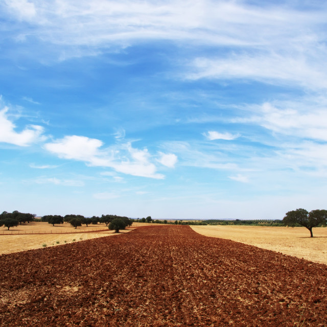 """plowed field at Alentejo region, south of Portugal"" stock image"
