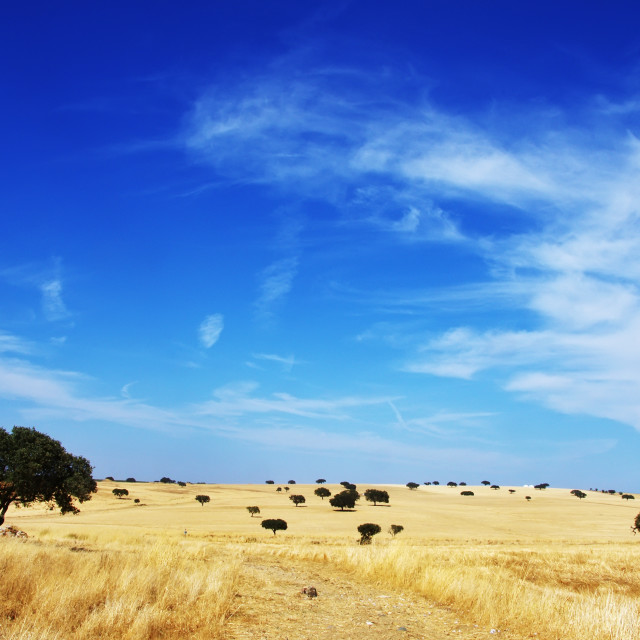 """landscape. Alentejo region, south of Portugal"" stock image"