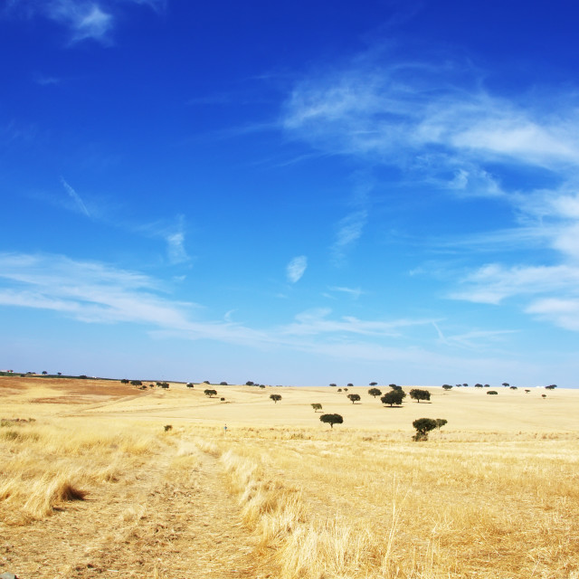 """Countryside landscape. Alentejo region, Portugal"" stock image"