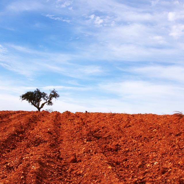 """red soil and tree in horizon"" stock image"