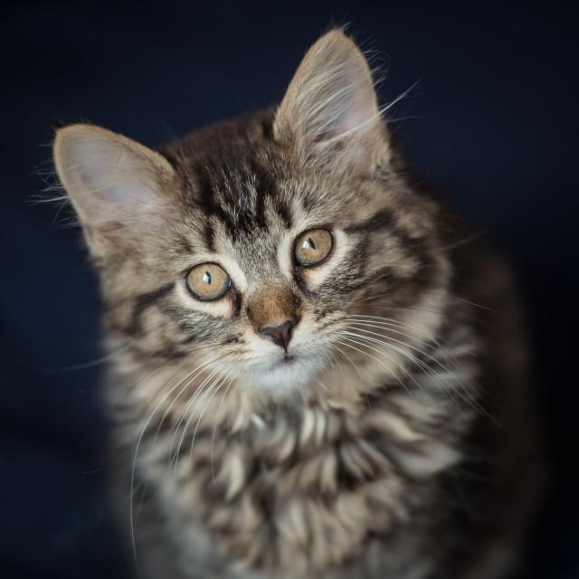 """""""Little Kitty"""" stock image"""