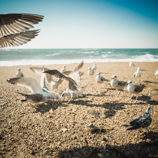 """Seagulls and the ocean"" stock image"