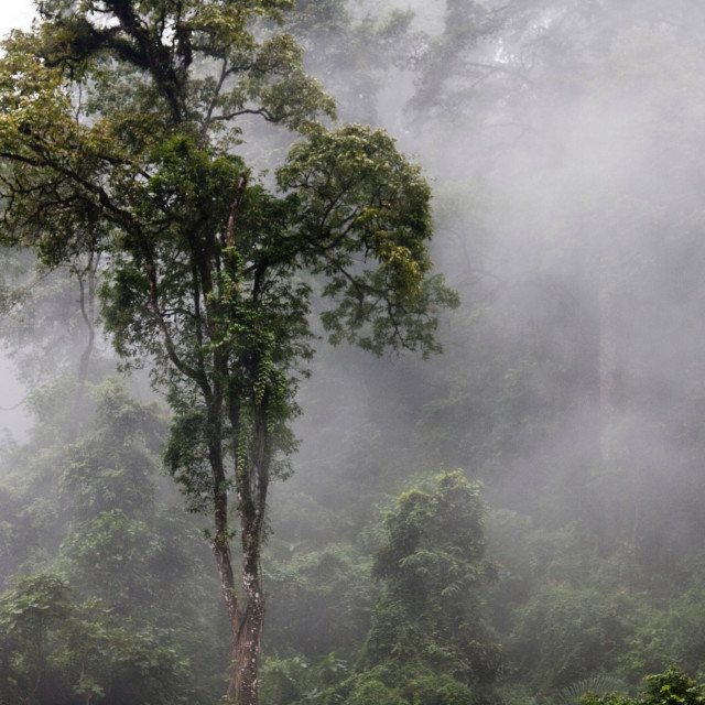 """Cloud Forest, Bhutan"" stock image"