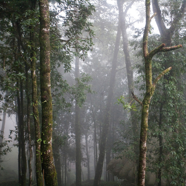"""Forest, Sikkim"" stock image"