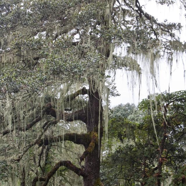 """Rainforest, Bhutan"" stock image"