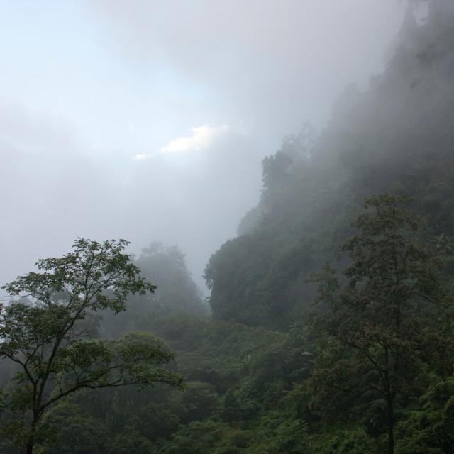 """Rain Forest, Bhutan"" stock image"