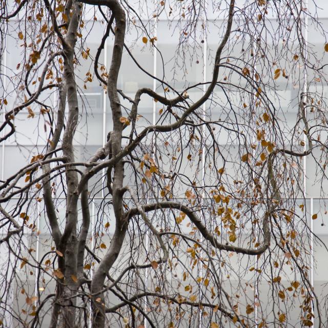"""""""Tree at MOMA, NY"""" stock image"""