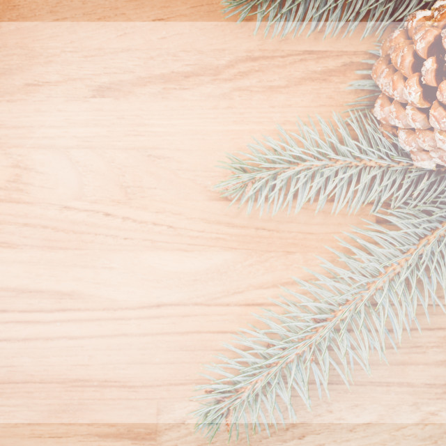"""fir twigs and conifer cones backgrounds"" stock image"