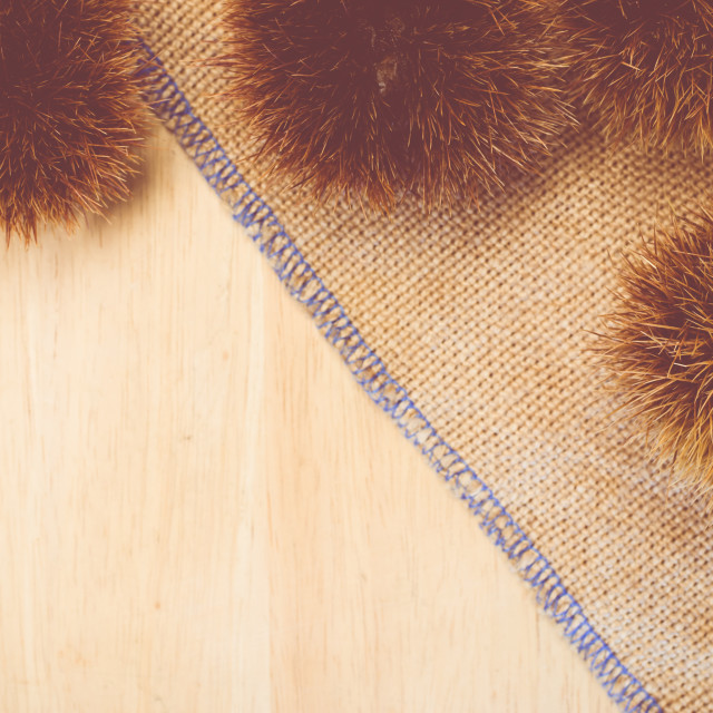 """chestnut hulls on a burlap background"" stock image"