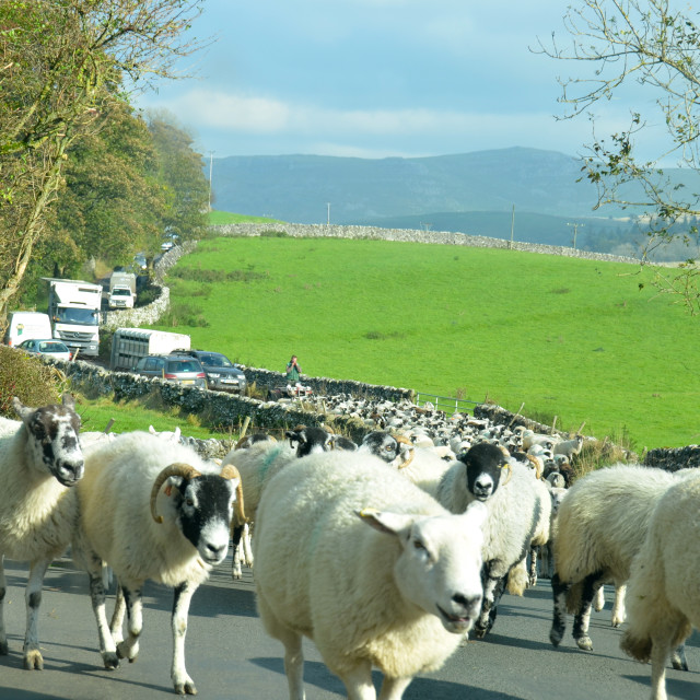 """Malham sheeplock"" stock image"