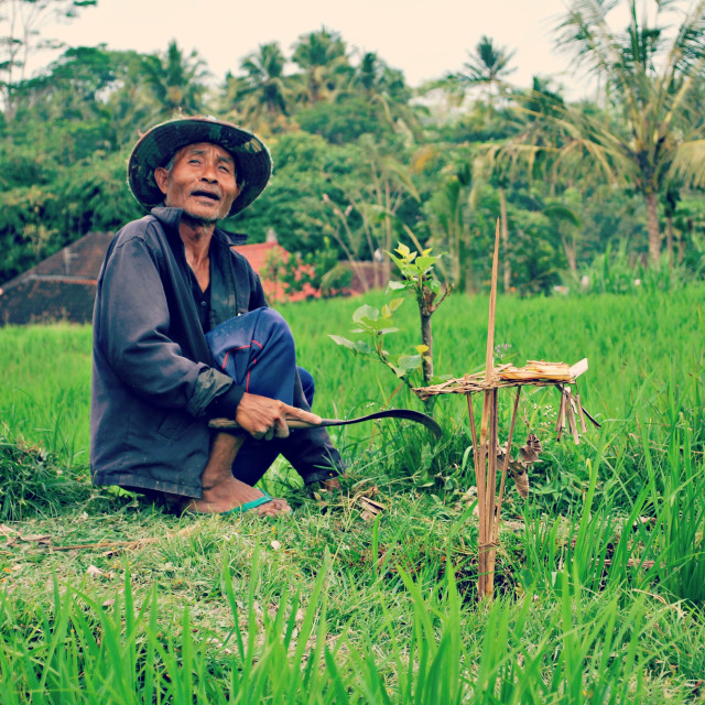 """Hard at work - Ubud"" stock image"