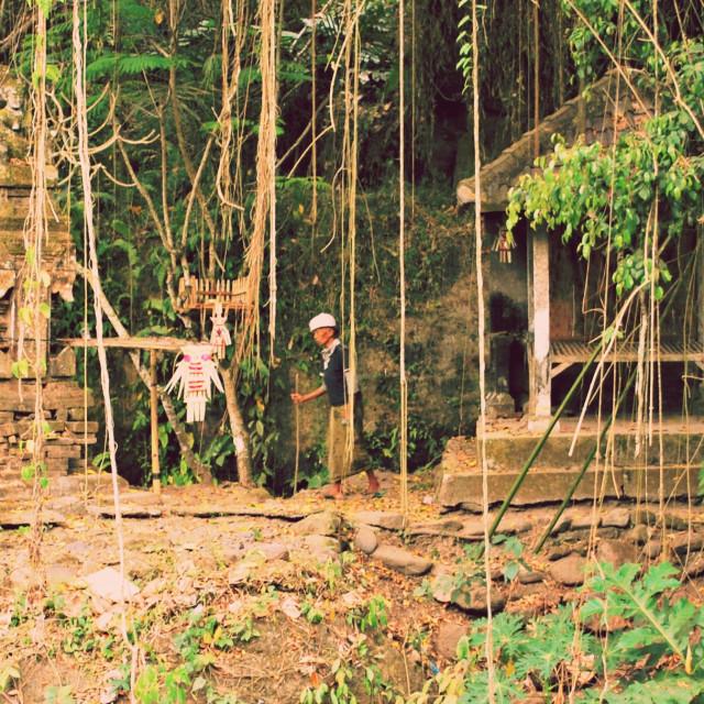 """Balinese rainforest"" stock image"