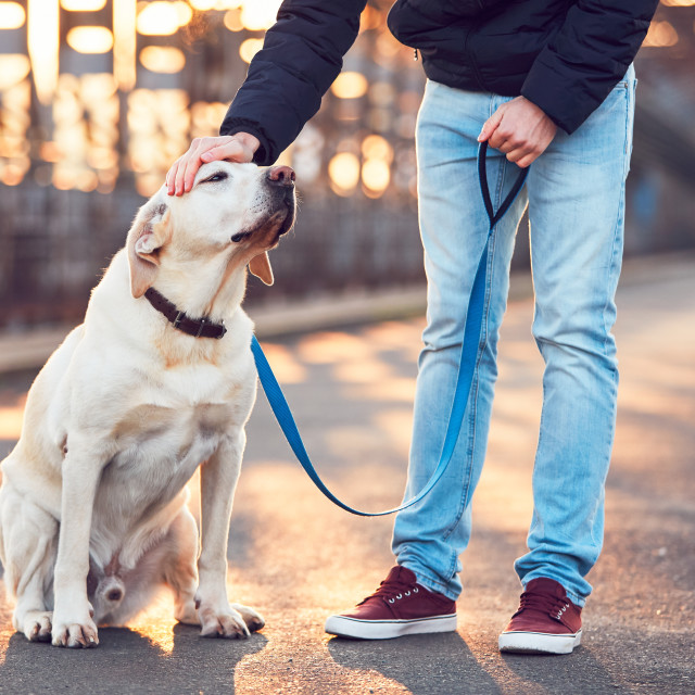"""Morning walk with dog at the sunrise"" stock image"