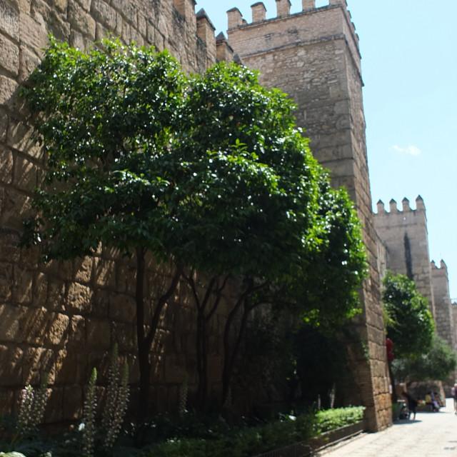 """""""Alcázar, Sevilla"""" stock image"""