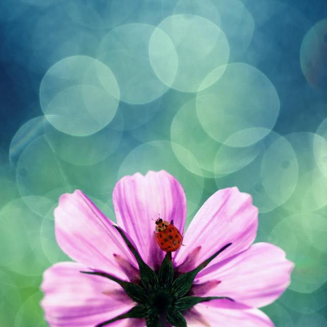 """Little Ladybug on a wing"" stock image"