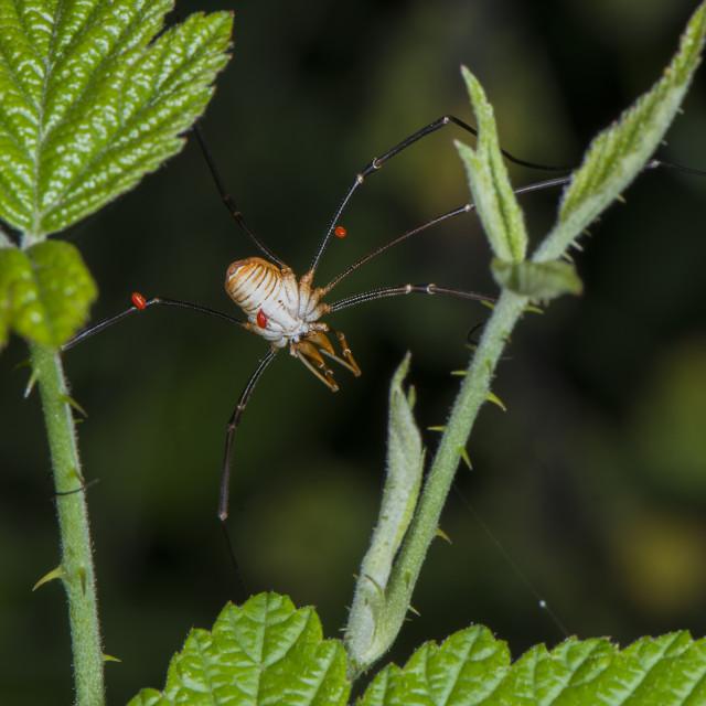 """Spider"" stock image"