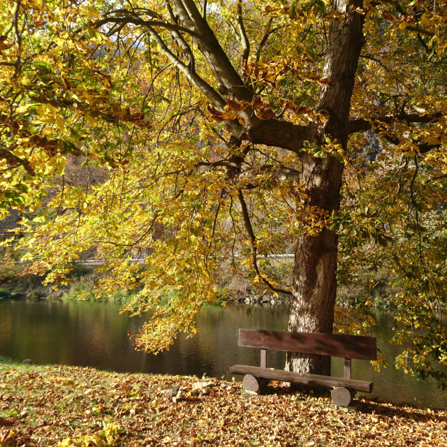 """Autumn rest"" stock image"