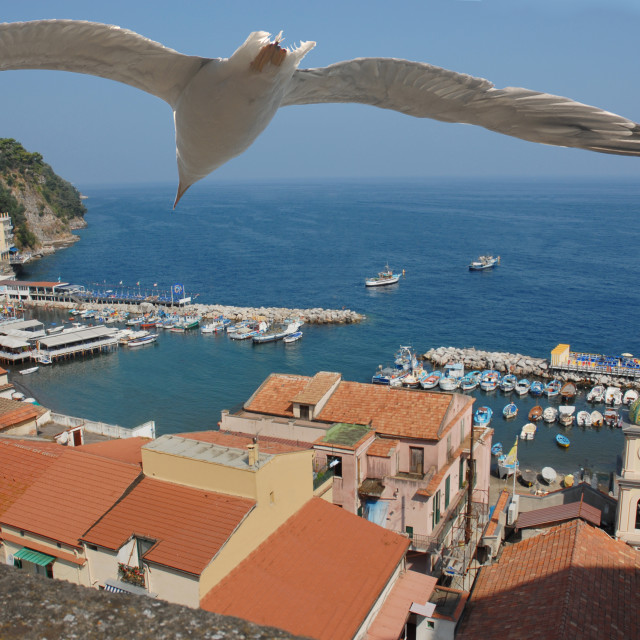 """Flying with a gull"" stock image"