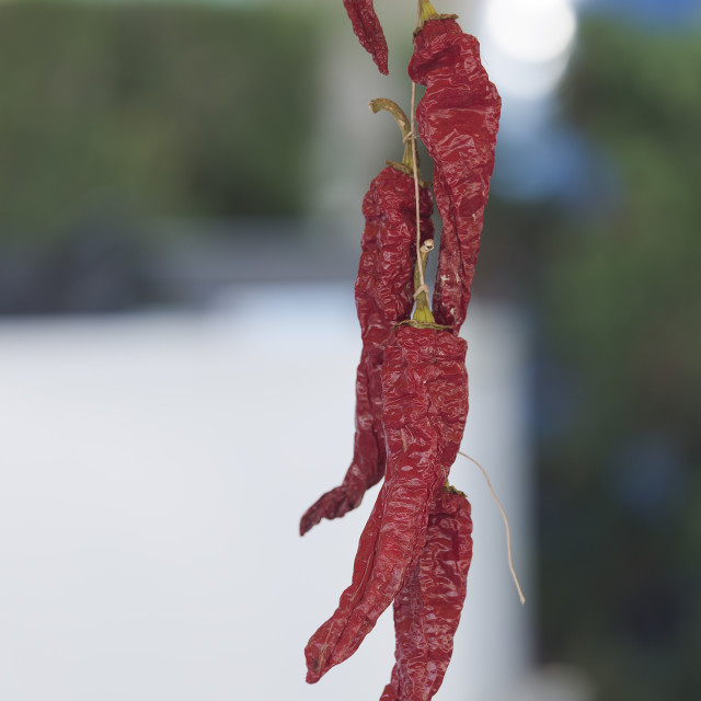 """Dry peppers hanging from a thread"" stock image"