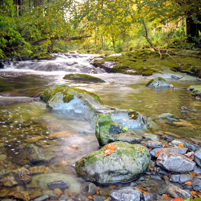 """""""The Shimna River, Tollymore Forest."""" stock image"""
