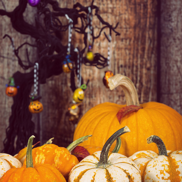 """Pumpkin display with autumn leaves against rustic Halloween back"" stock image"