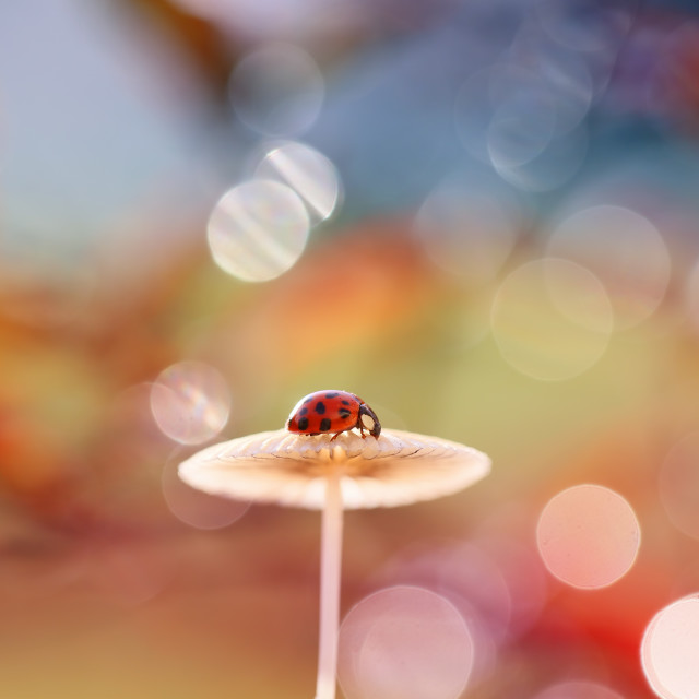 """Viewpoint of a small Ladybug"" stock image"