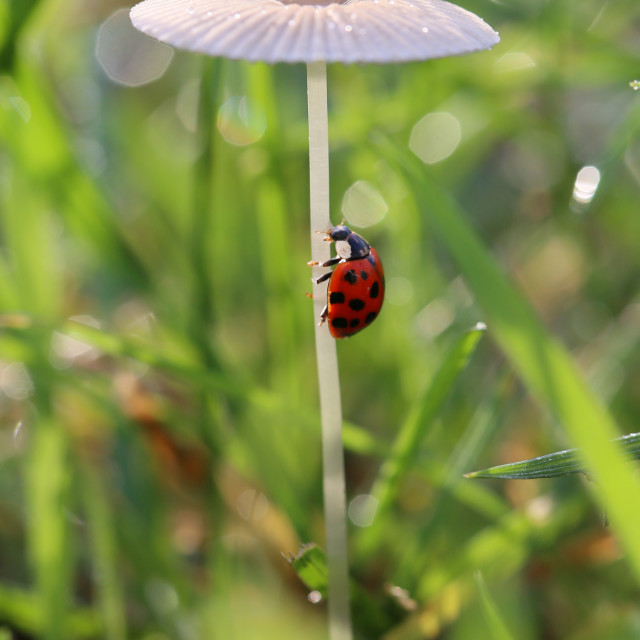 """Ladybird comes after the stem to the top of the"" stock image"