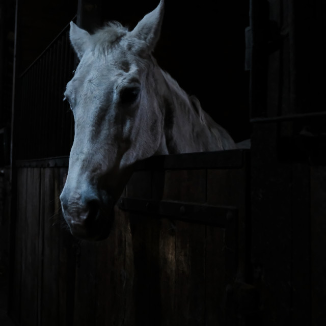 """Horse in the stable"" stock image"