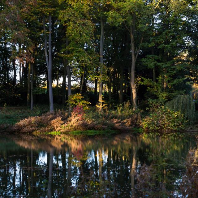 """Autumn morning light"" stock image"