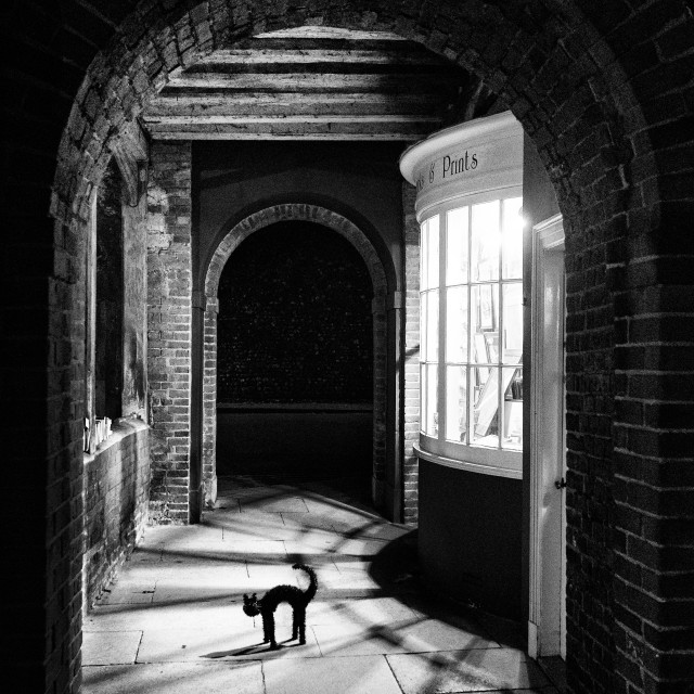 """Black Cat in Gothic scene"" stock image"