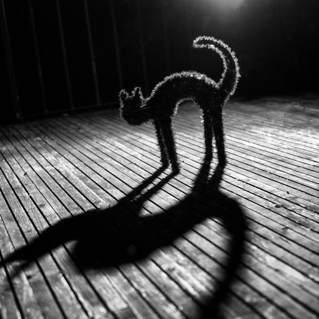 """Black Cat at night"" stock image"