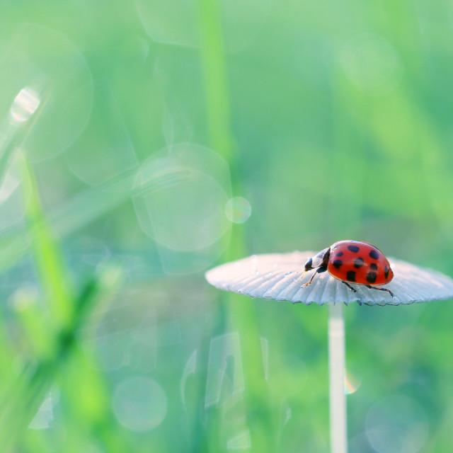 """Walk around the small red ladybugs"" stock image"