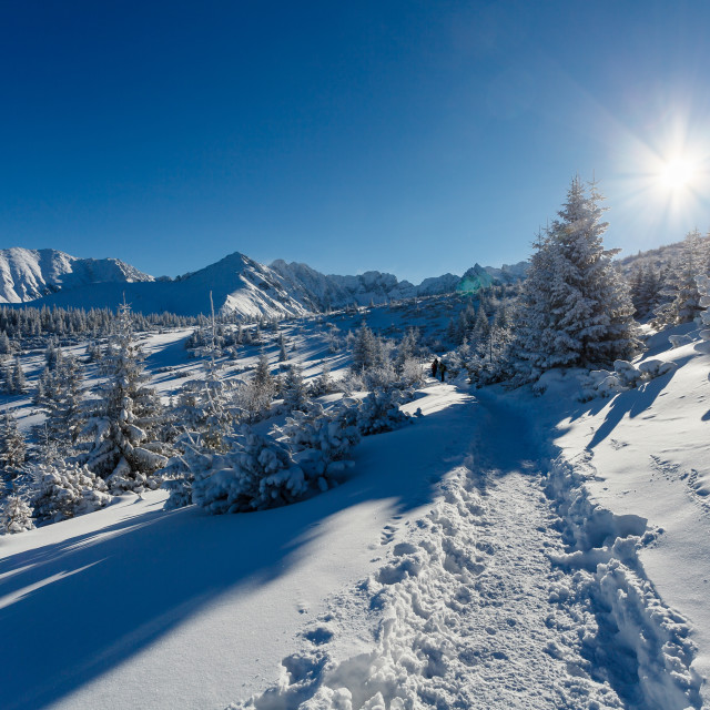 """Winter mountain landscape, pine forest covered with snow, Tatry Mountains, Poland"" stock image"
