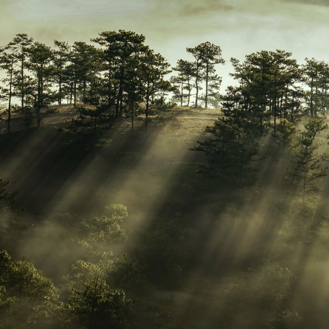 """Morning in a pine wood"" stock image"