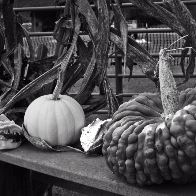 """""""Fall Gourds"""" stock image"""