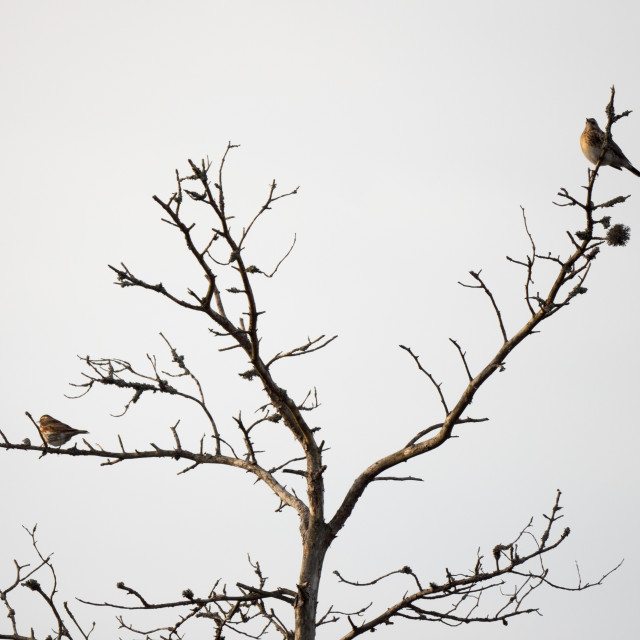 """Dead tree with birds"" stock image"