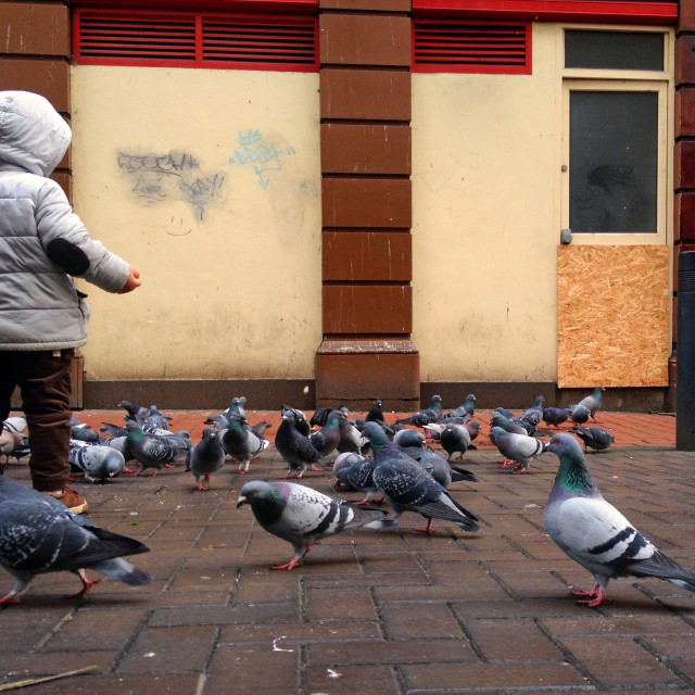 """Young boy feeding pigeons"" stock image"