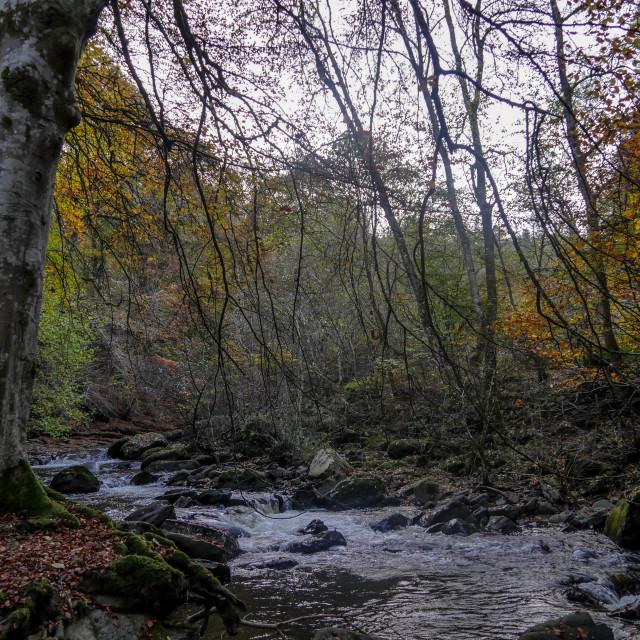 """River through Aberfeldy"" stock image"