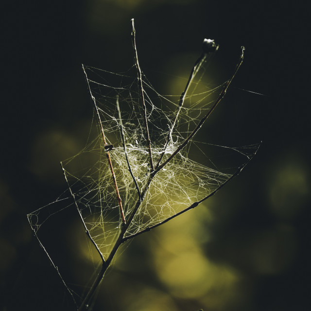 """""""Spider Miracles"""" stock image"""
