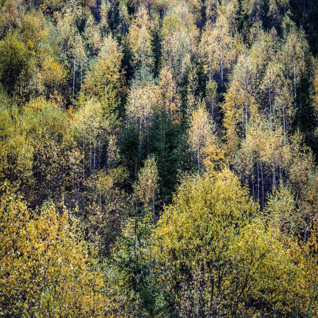 """Autumn Painting"" stock image"