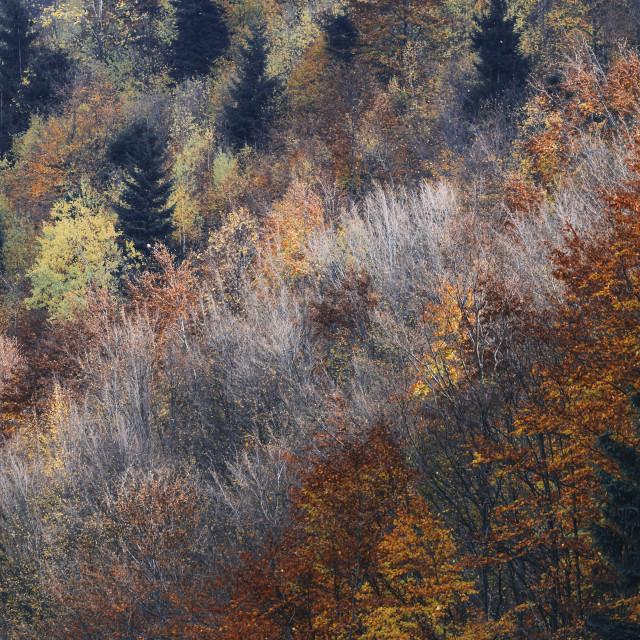 """""""Layered Fall"""" stock image"""