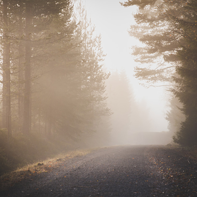 """Misty Road"" stock image"