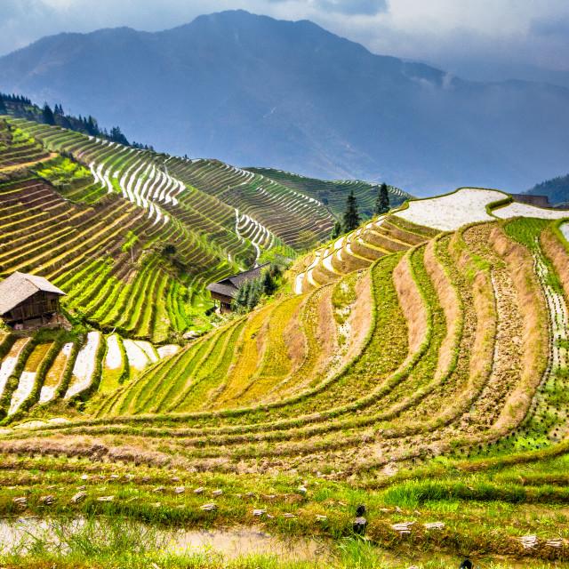 """""""Chinese Landscape"""" stock image"""