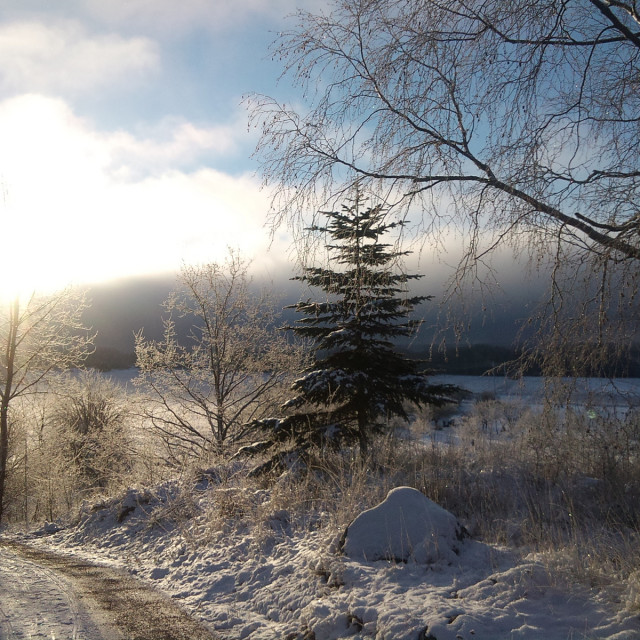 """Sunny winter landscape in Sweden"" stock image"